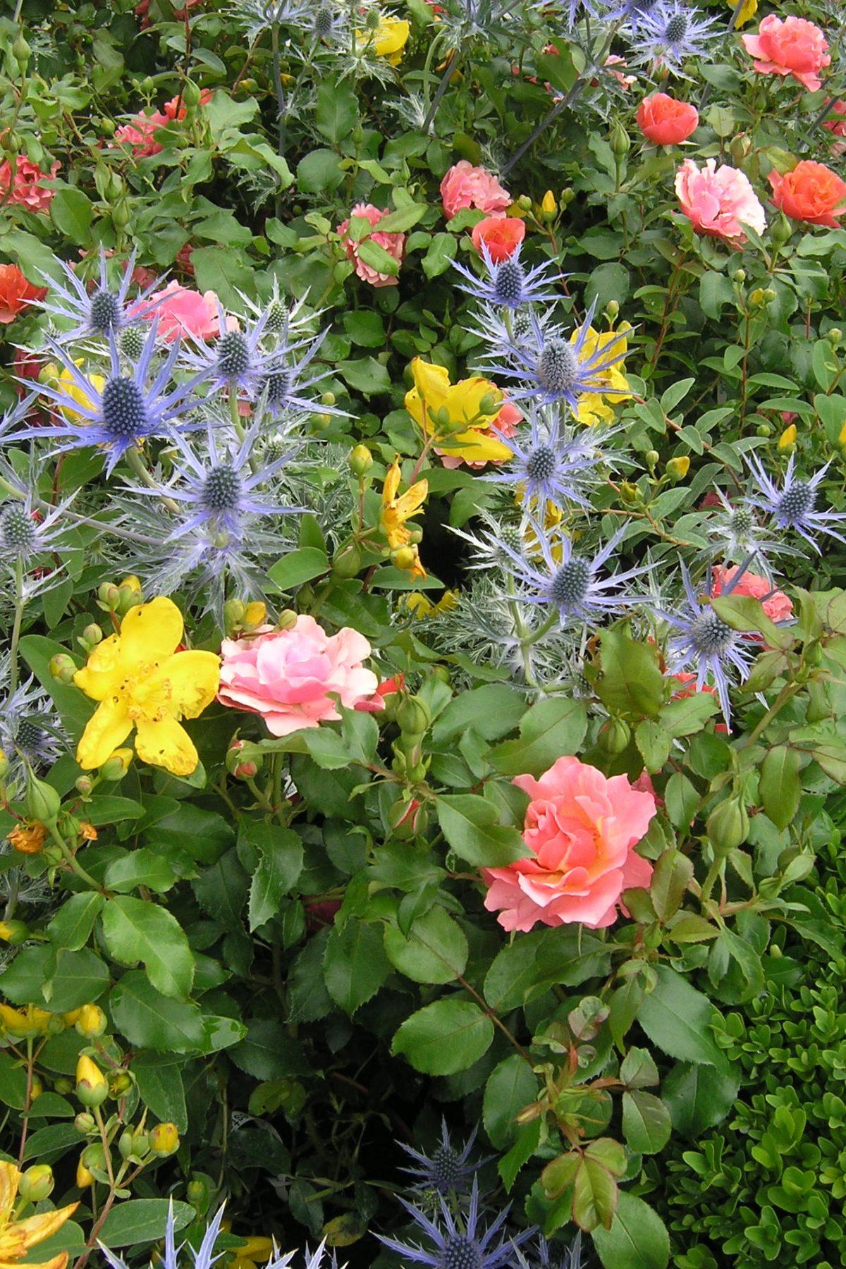 Hecken Die Besten Ideen Fur Eine Schone Hecke Im Garten